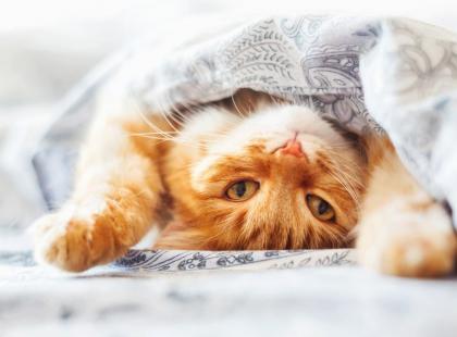 Koniec z piciem w samotności! Wino dla kotów to nowy hit!