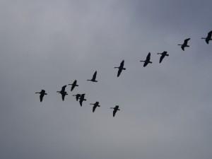 Jak wróżyć z lotu ptaków