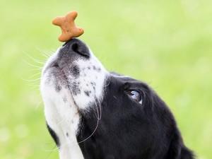 Jak nauczyć psa różnych sztuczek?