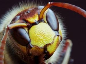 Jakie dolegliwości leczą produkty pszczele?
