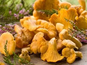 Kurki - grzyby jadalne (pieprznik jadalny)