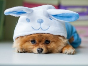 3 sposoby, jak podać zwierzakowi lek
