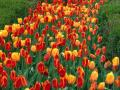 Kwiaty i rośliny chronią przed zatrutymi strzałami