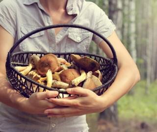 jak uniknąć trujących grzybów