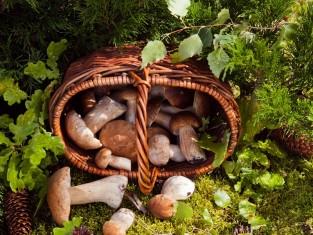 Mały atlas grzybów jadalnych