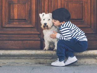 pies, dziecko