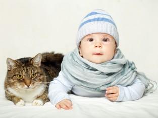 dziecko, kot, zwierzęta