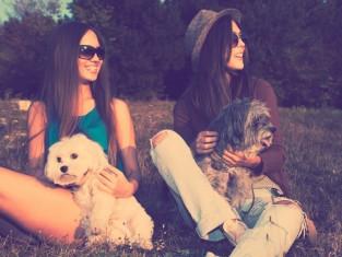 pies, spacer, kobieta, przyjaźń