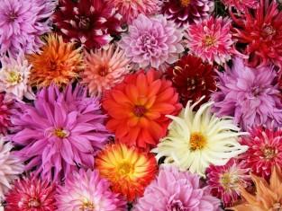 kwiaty_jesienne.jpg