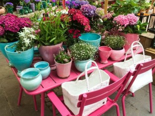 Szkodniki kwiatów doniczkowych