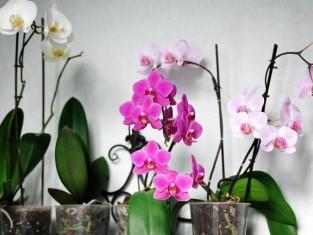 jakie szkodniki są w kwiatach, jakie owady mogą być w roślinach