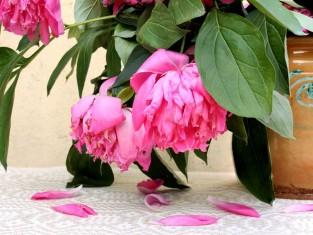 dlaczego kwiaty usychają, dlaczego kwiaty marnieją, dlaczego moje kwiaty nie chcąrosnąć