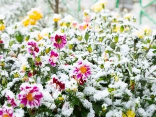 co zrobić w ogrodzie przed zimą, prace ogrodowe przed zimą, ostatnie prace ogrodowe