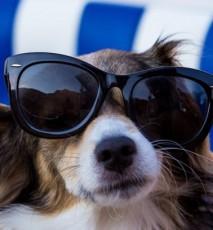 Jak dbać o psa w upalne dni