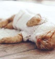 Problemy posiadaczy zwierząt, problemy właścicieli kotów, problemy właścicieli psów