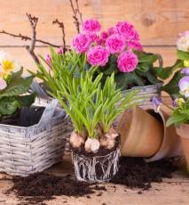jak wprowadzić do domu wiosenny nastrój, jak zaprosić wiosnę do swojego domu
