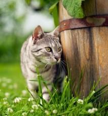Klesz u kota - jak go usunąć i jak zabezpieczyć pupila przed ukąszeniem
