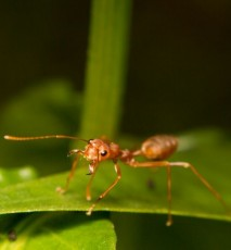 Sposób na mrówki - jak uchronić się przed inwazją mrówek