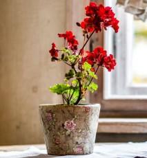 Szkodniki kwiatów doniczkowych w zimę