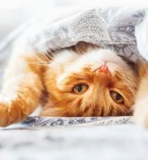 wino dla kotów, wino dla zwierząt, alkohol dla kota