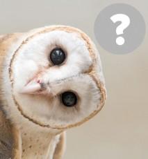Mity na temat zwierząt, dziwne fakty o zwierzętach, czy koty lubią mleko