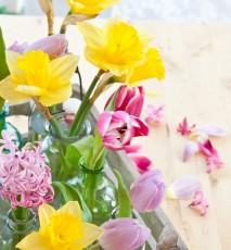 jakie kwiaty hodować zimą, jak uprawiać zimą kwiaty, zimowy ogródek w domu
