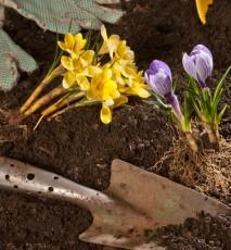 prace ogrodowe w marcu, co robić w ogrodzie w marcu, ogrodowe prace na marzec, kalendarz ogrodowy na marzec