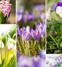 wiosenne kwiaty w domu, jakie kwiaty hodować wiosną w domu