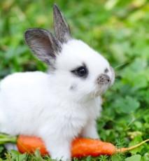 co robić gdy królik nie lubi klatki, co zrobić jeśli królik gryzie klatkę
