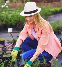 co zrobić w ogrodzie we wrześniu, kalendarz prac ogrodowych na wrzesień