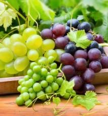 odmiany winogron