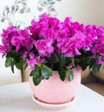 domowe sposoby na szkodniki roślin, jak chronić rośliny domowymi sposobami