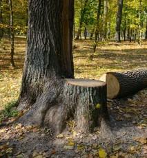 Wycinka drzew na własnej posesji