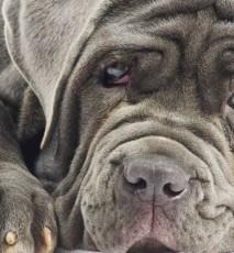 jakie sąnajdroższe zwierzęta świata, najdroższe zwierzaki na świecie
