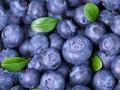dania z jagodami przepisy, co zrobić z jagód, przepisy z jagodami, pomysły na jagody