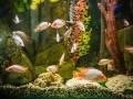 Jak założyć akwarium - 5 kroków