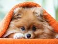 czego nie może jeść pies, czego nie wolno jeść psom, czego psy nie powinny jeść