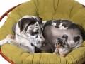 co robić gdy zwierzak nie lubi legowiska, co robić gdy pies lub kot nie przepada za legowiskiem