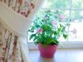 trujące rośliny doniczkowe, trujące kwiaty