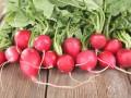 ciekawostki o rzodkiewce, właściwości rzodkiewki, dlaczego jeść rzodkiewkę, fakty na temat rzodkiewki