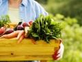czy trudno jest hodować własne warzywa, jak wyhodować swoje warzywa, jak uprawiaćwarzywa