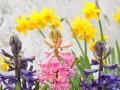 jakim wiosennym kwiatem jesteś psychotest