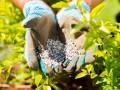 jak używać nawozów, jak stosować nawozy, bezpieczne stosowanie nawozu