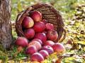 co zrobić w ogrodzie w listopadzie, kalendarz prac ogrodowych na listopad