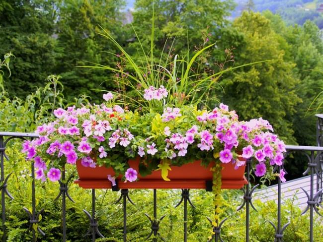 Zioła i kwiaty na balkonie - rady pani domu
