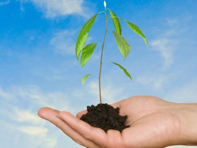 awokado, roślina, sadzenei roślin, hodowla awokado