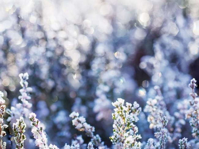 pomysły na zimowy ogród, jak sprawić żeby ogród ładnie wyglądał zimą