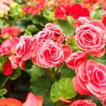Najpiękniejsze kwiaty do donic ogrodowych