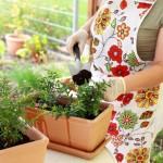 Rozsada kwiatów i warzyw