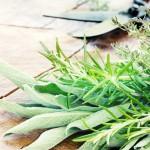 Rośliny odstraszające szkodniki